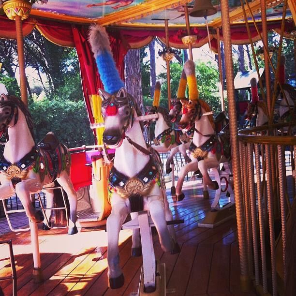 Wild horses#vacanzaconverdun