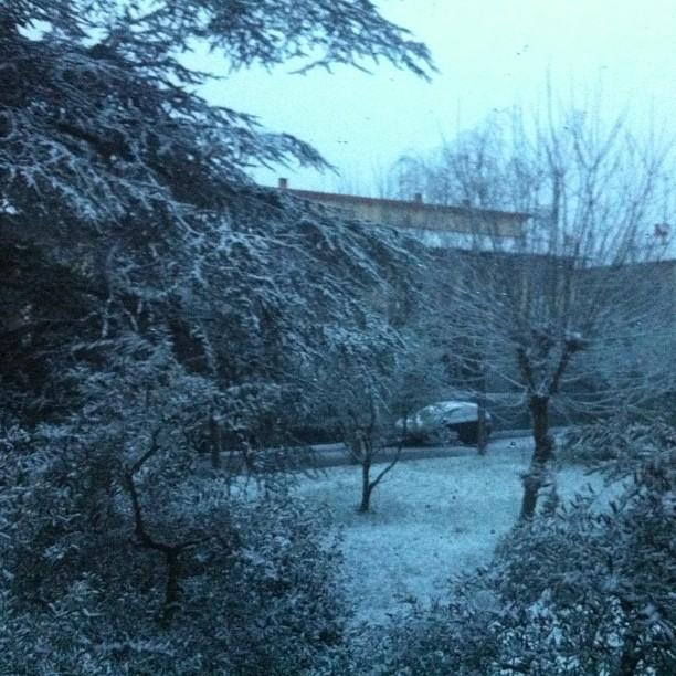 Due fiocchi di #neve #prato